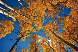 Fotografia no Outono: o que você precisa saber. Confira!